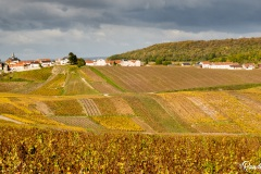 Champagne-Epernay-Cuis-Cramant-Avize-16